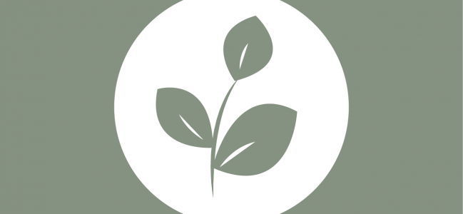 Olive Tree Family Services Logo Concepts